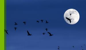 Is Smart Lighting for the Birds?